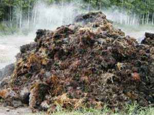 Manure is an organic fertilizer