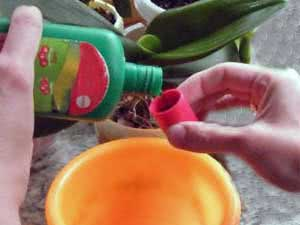 How to fertilize flowers