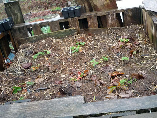 How to make compost in the country