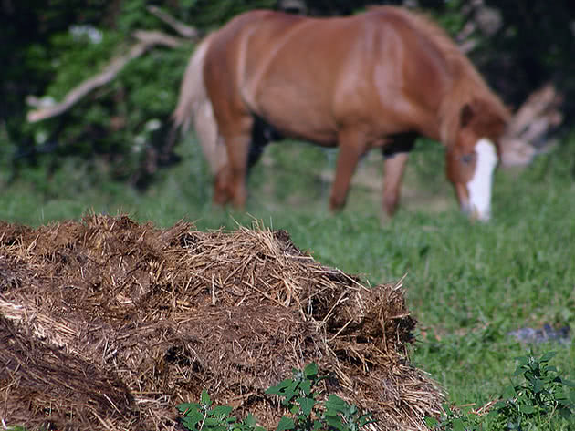 How to use manure in the garden and in the greenhouse