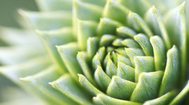 Green_Plant_by_Simon_Schlegl